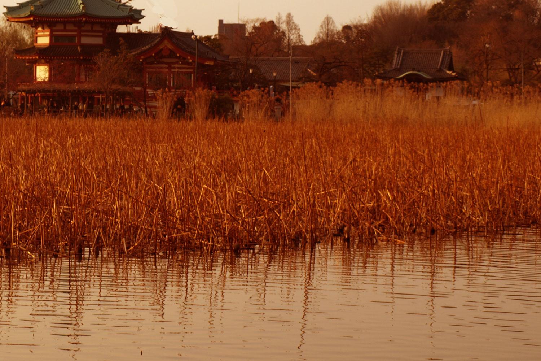 上野・不忍池イメージ2