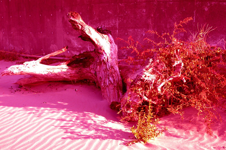 巨木イメージ